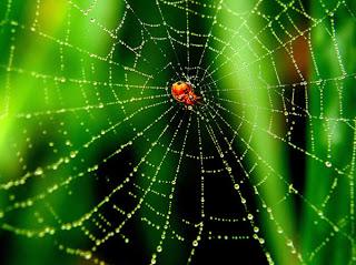 örümceğin ağı