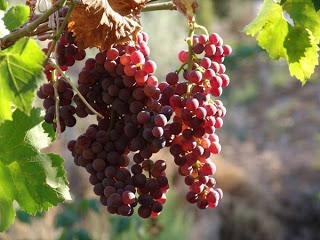 Şarap hikayesi