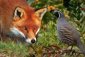 Kuş ve şikayet üzerine dersler
