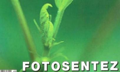 Fotosentez - bilim çocuk