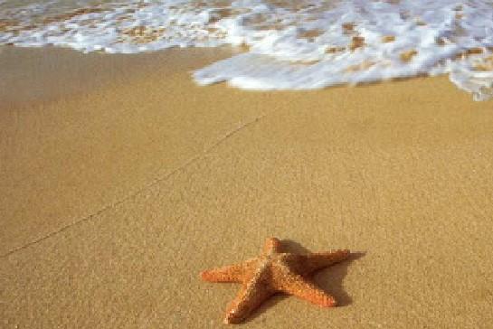 Deniz yıldızını kurtaran adam