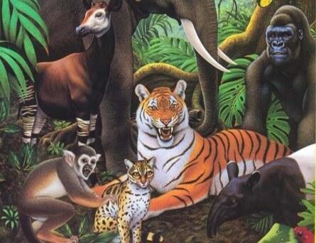Hayvanların dünyası