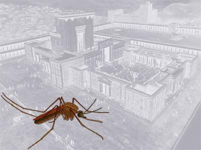 Hz.Süleyman ve Sivri sinek hikayesi